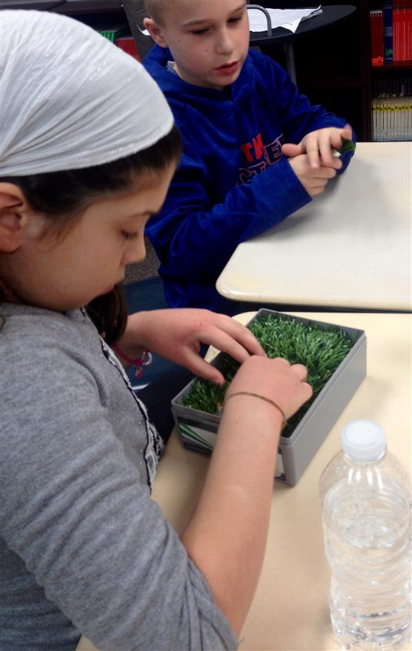 Students handled the turf prop brought in by Bostrom